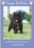 "Cairn Terrier-Happy Birthday - ""Are You Really THAT Old"" Theme"